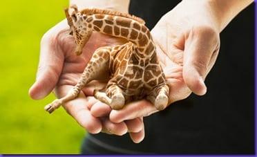LapGiraffe