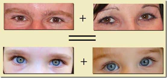 Family Eyes 2