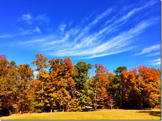 Birmingham Alabama Fall Colors
