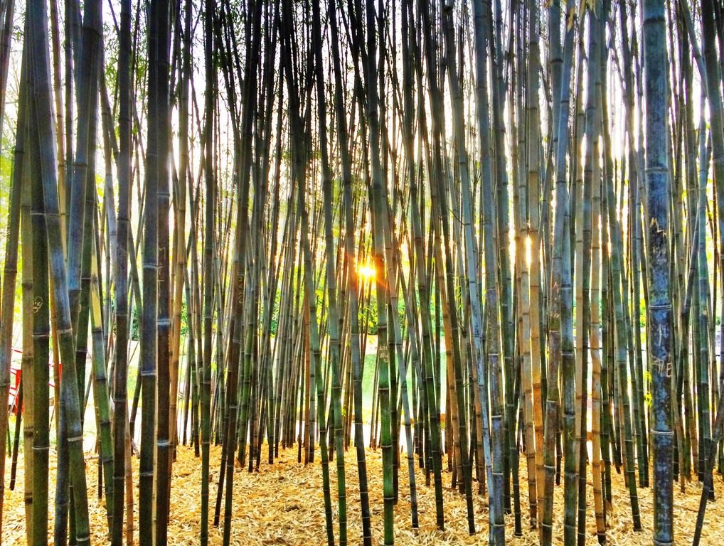 """project report on bamboo (source: bamboo revetnment project) according to the report, """"the key lesson from these case studies is simple bamboo can play an important role in reclaiming degraded land and contributing to poverty alleviation in rural areas."""