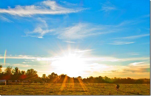 141024c Alabama Longhorns at Sunset