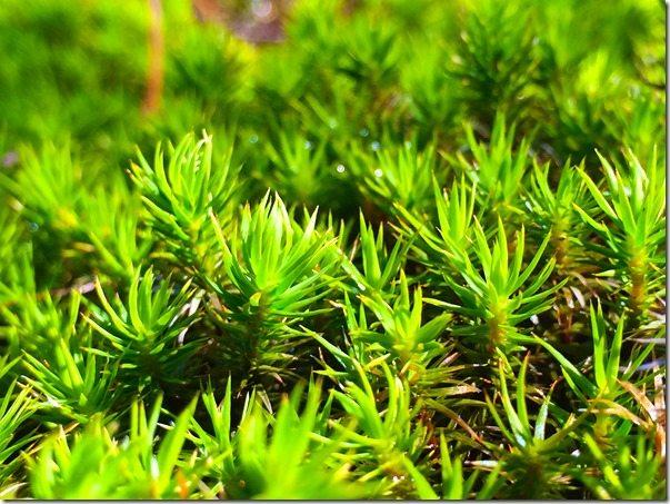 Moss Rock Preserve Ferns