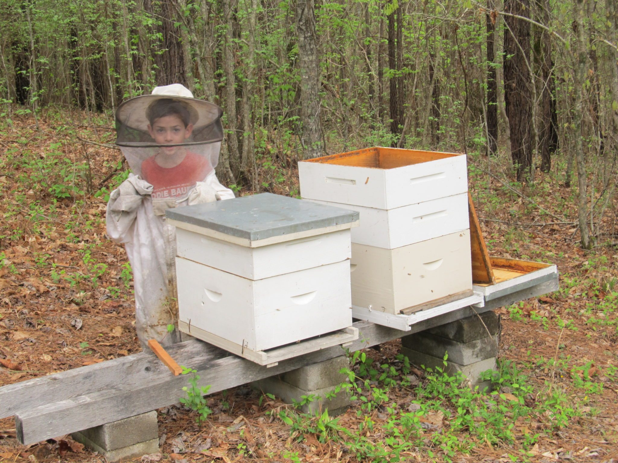 Eli and the Bees