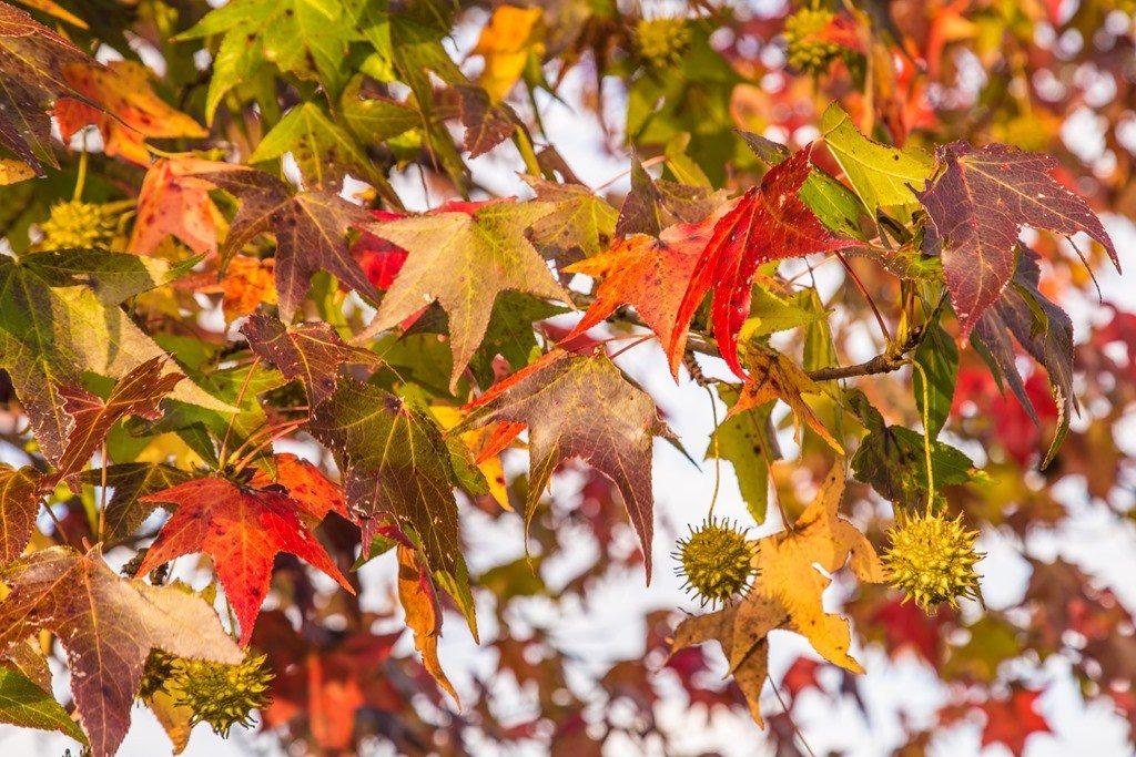 151106i-Leaves-Hanging-On.jpg