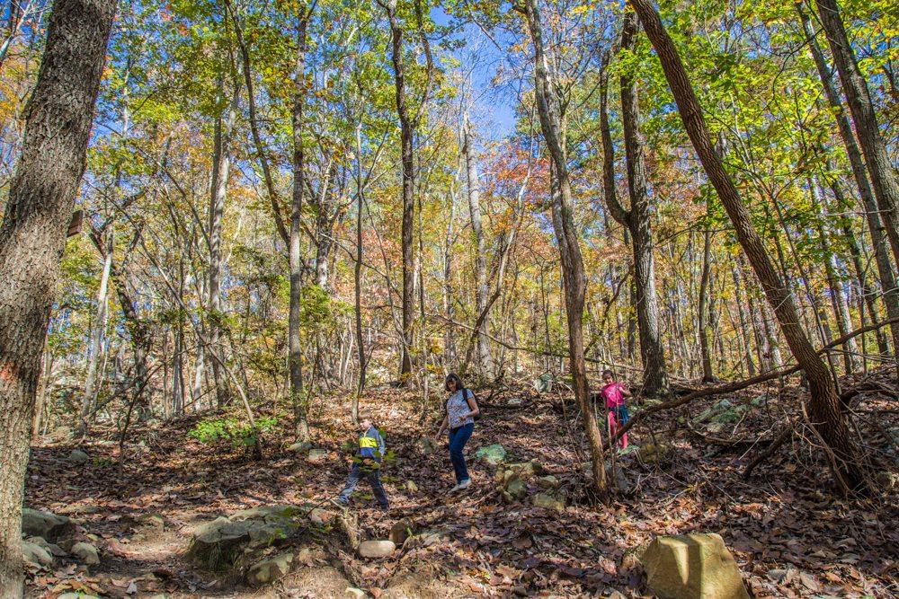 151110kALT-Guntersville-Hikers