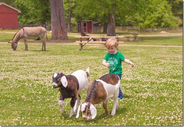 Jonas-Goat-Herder