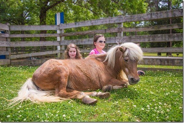 Loulie-Ali-Pony