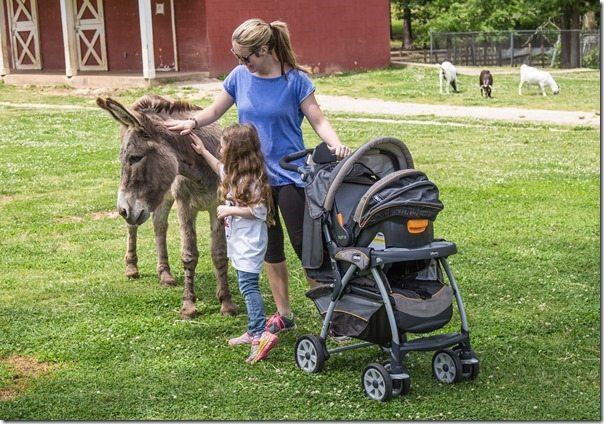 Loulie-Donkey-Renee