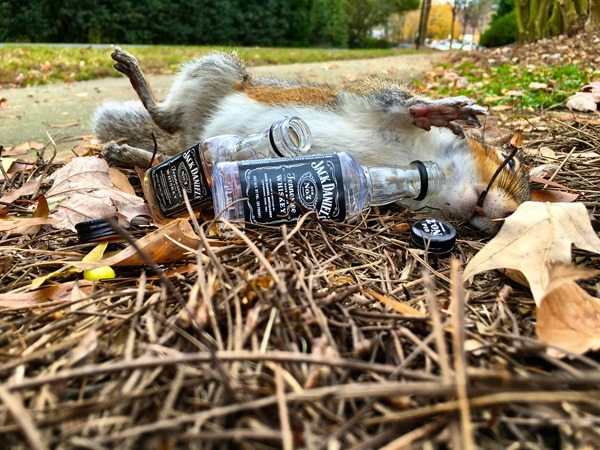 Sloppy the Squirrel