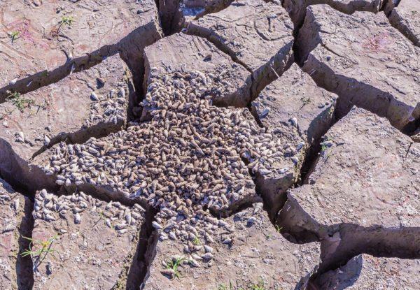 161104-lake-purdy-drought-_mg_8187