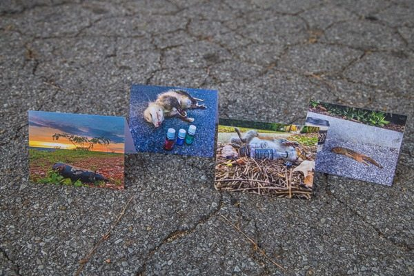 Roadkill-Note-Cards-Group_MG_9178